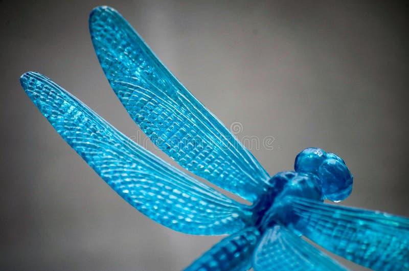 Blaue Libelle stockfotografie