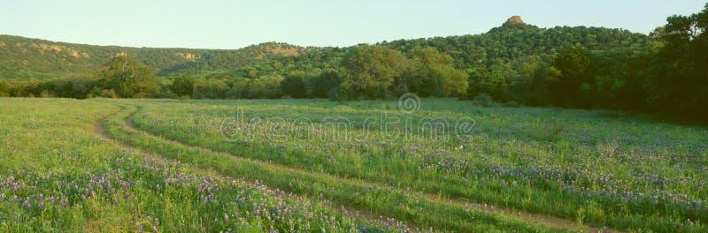 Blaue Mützen im Hügel-Land stockfotografie