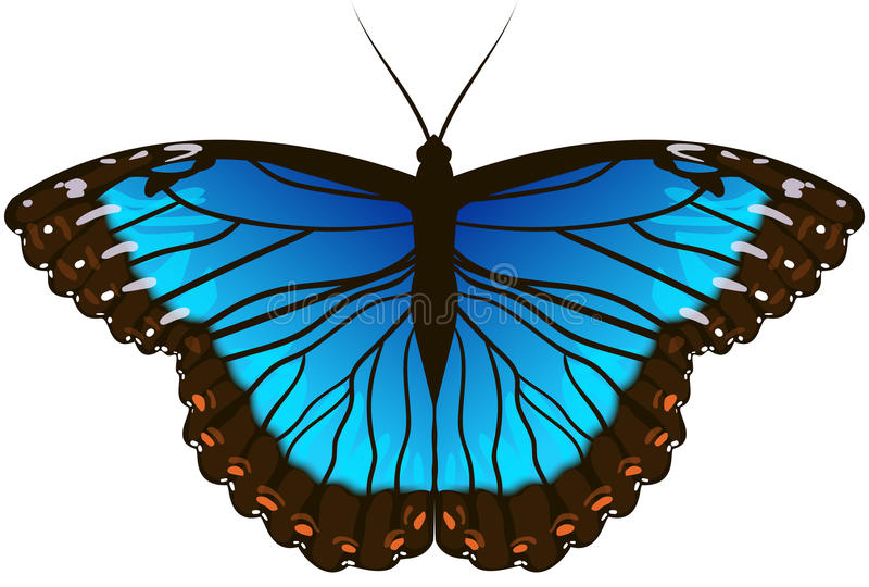 Blaue Morpho Basisrecheneinheit lizenzfreie abbildung