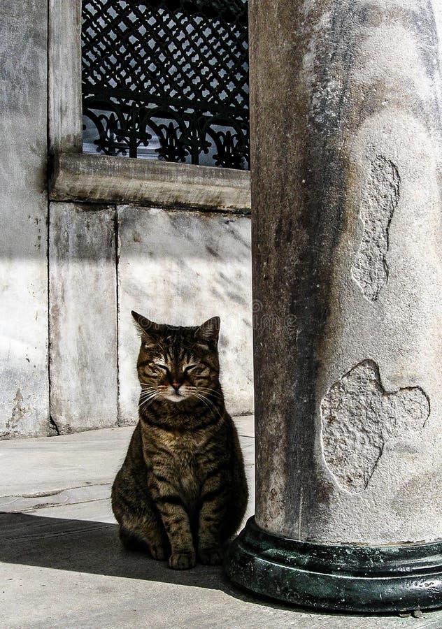Blaue Moschee in Istanbul-Katze und -säule stockfotos