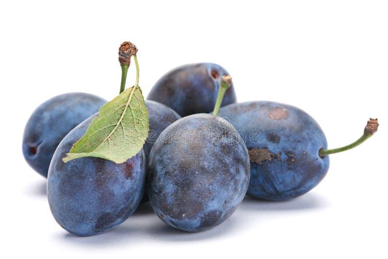 Blaue Pflaume mit Blatt lizenzfreie stockfotografie
