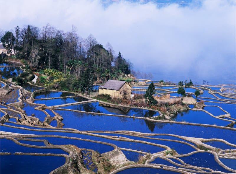 Blaue Reisterrassen von yuanyang lizenzfreie stockbilder