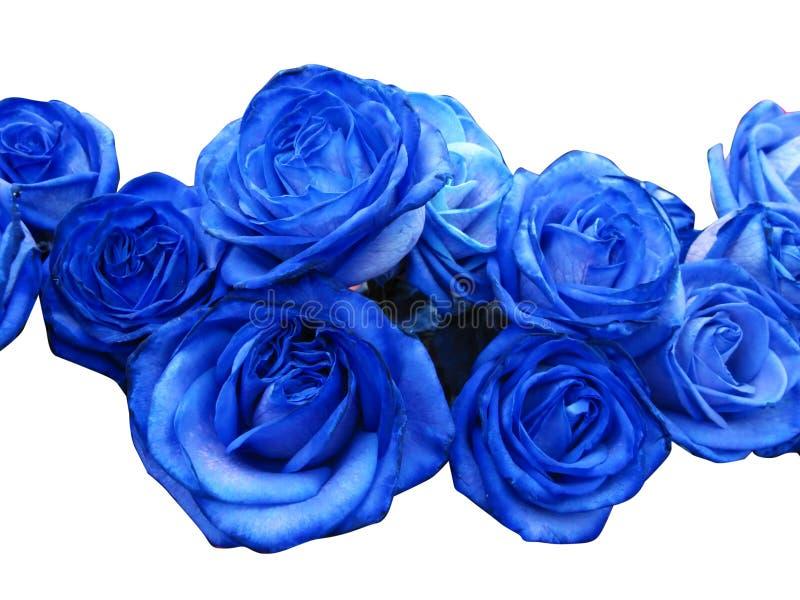 Blaue Rosen stockbild