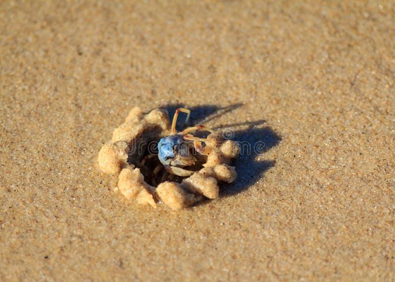 Blaue Sand-Befestigungsklammer lizenzfreies stockfoto