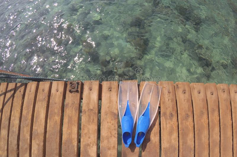 Blaue Schwimmflossen am Ufer lizenzfreie stockfotos