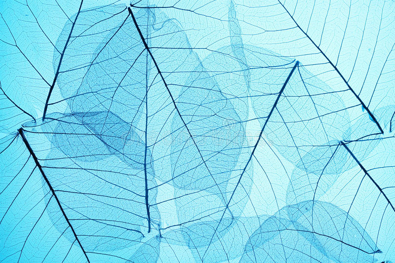 Blaue Skeletblätter lizenzfreies stockbild