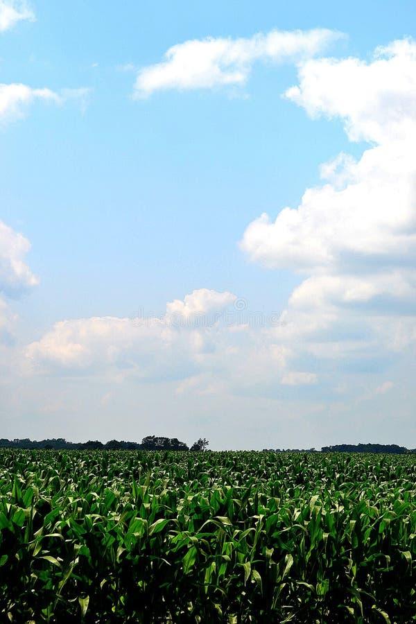 Blaue skys stockfoto