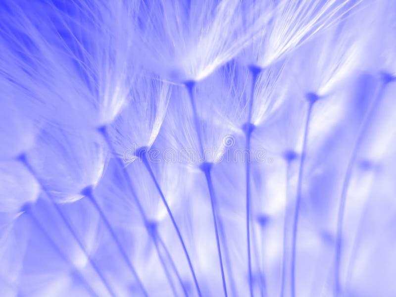 Blaue Startwerte Für Zufallsgenerator Stockfotografie