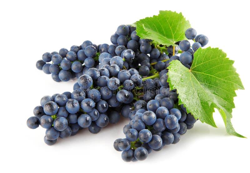 Blaue Traube mit getrennter Frucht des Grüns Blätter lizenzfreie stockfotografie