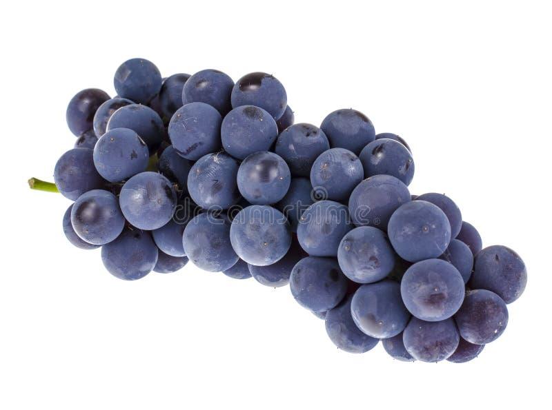 Blaue Trauben, die auf weißem Grund isoliert wurden stockfotografie
