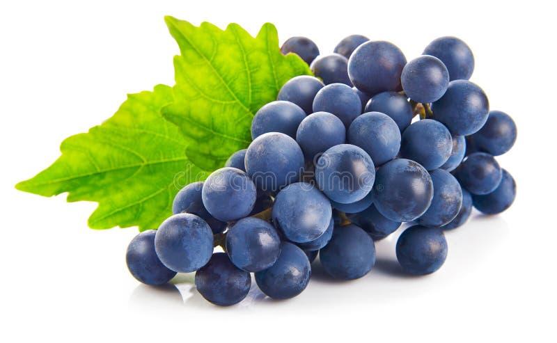 Blaue Trauben mit grüner Blattgesunder ernährung, auf weißem Hintergrund lizenzfreies stockbild