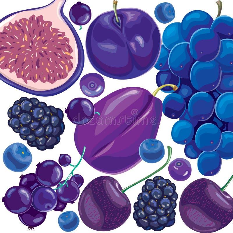 Blaue und lila Früchte der Mischung und Beeren lizenzfreie abbildung
