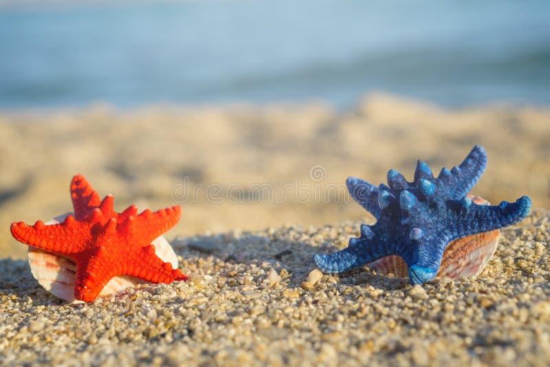 Blaue und rote Starfish mit Oberteilen auf Sand am Strand Unscharfes blaues Meer auf Hintergrund stockfoto
