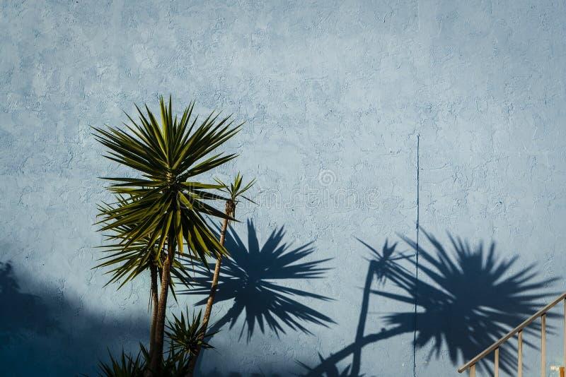 Blaue Wand u. tropische Anlagen stockfoto
