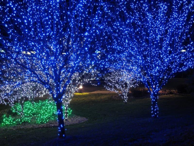 Blaue Weihnachtsbaum-Paare stockbild