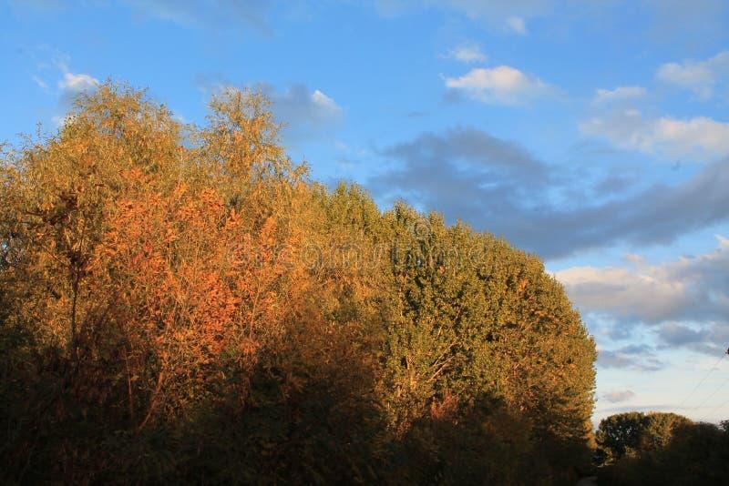 Blaue Wolken im Wald stockfotos