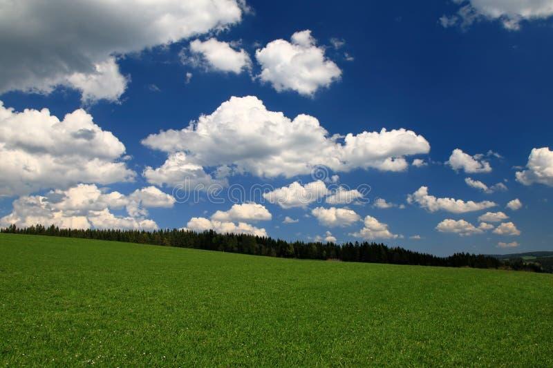 Blauem Himmel del unter de Schwarzwaldwanderung fotografía de archivo libre de regalías