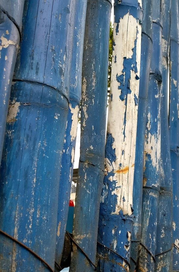 Blauer Bambus lizenzfreie stockfotos