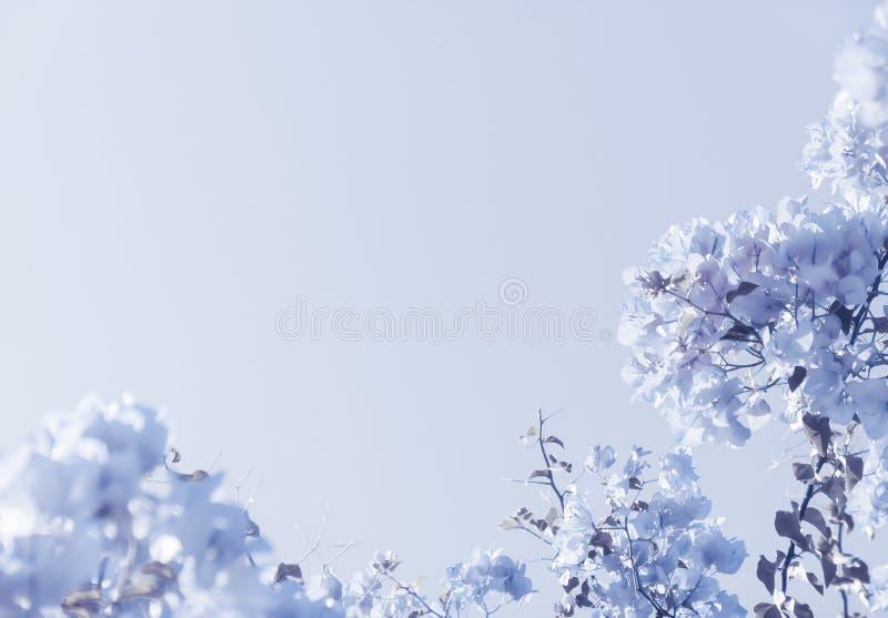 Blauer Blumenaufbau stockbilder