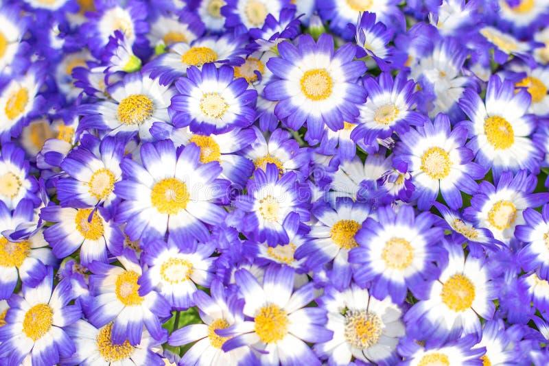 Blauer Blumenhintergrund Nettes buntes Blumen Muster stockbilder