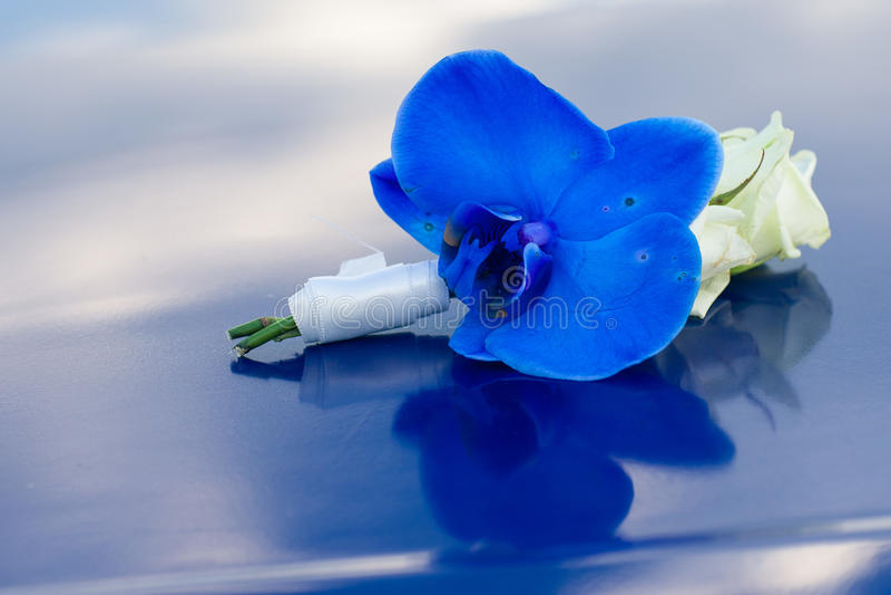 Blauer Boutonniere stockfoto