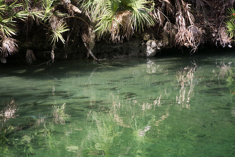 Blauer Frühlings-Nationalpark, Florida, USA lizenzfreies stockfoto