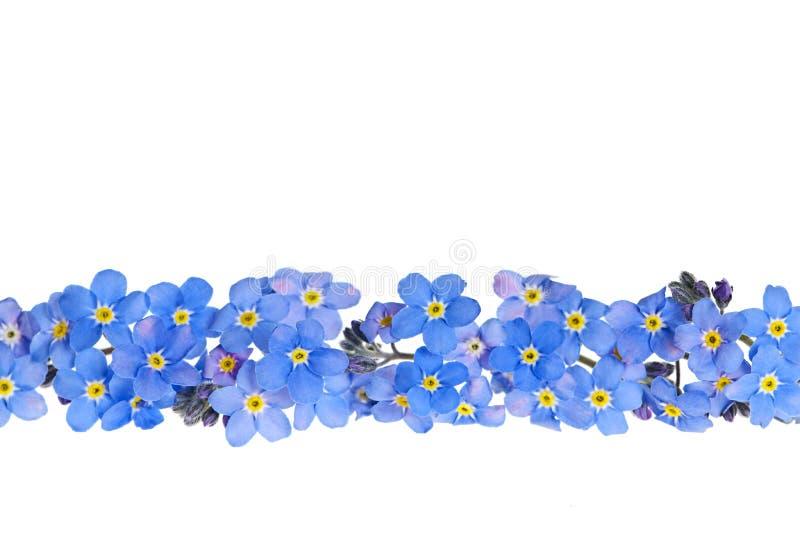 Blauer Frühlingsblumenrand lizenzfreie stockfotos