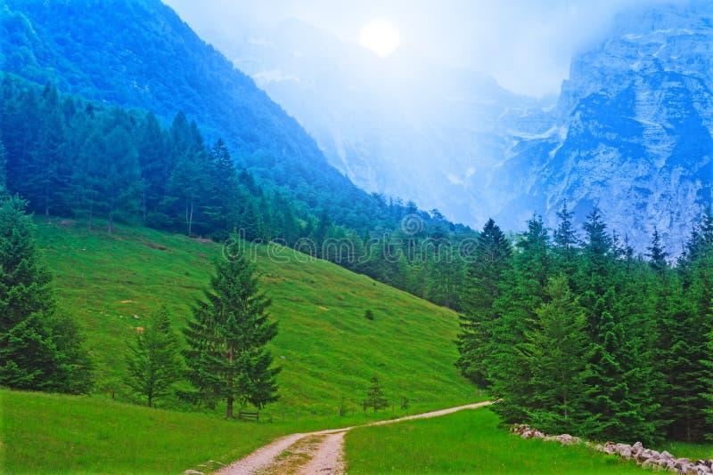 Blauer Gebirgswald stockfoto