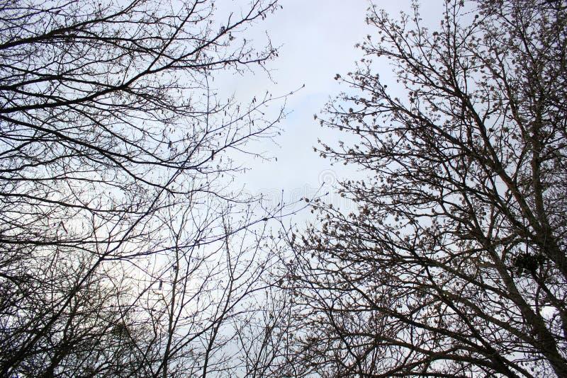 Blauer grauer Himmel und Baumaste über Ihrem Kopf, schauen oben lizenzfreie stockfotos