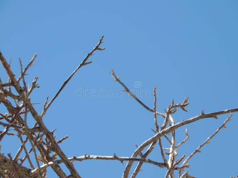 Blauer Himmel stockfotos
