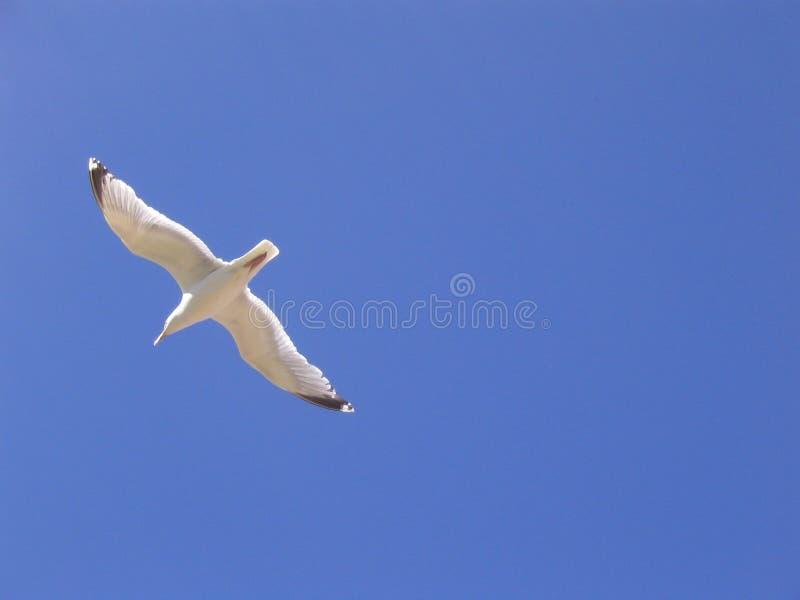 Blauer Himmel der Seemöwe lizenzfreie stockbilder
