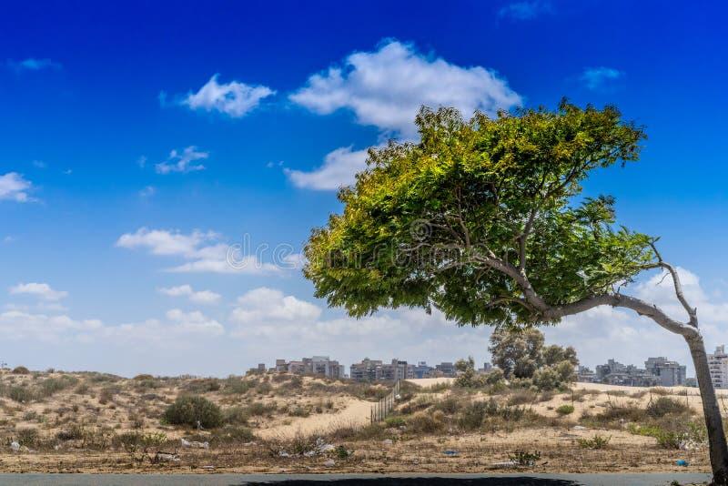 Blauer Himmel des einsamen Baums lizenzfreie stockfotografie