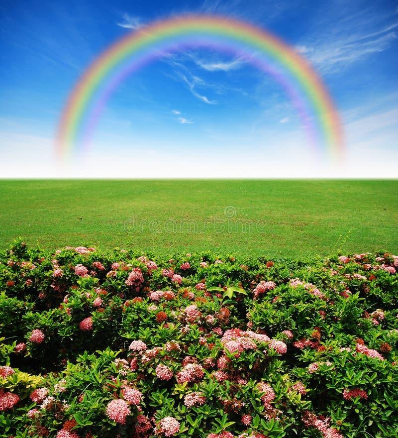 Blauer Himmel des Gartenrosa-Blumenrasens stockbilder