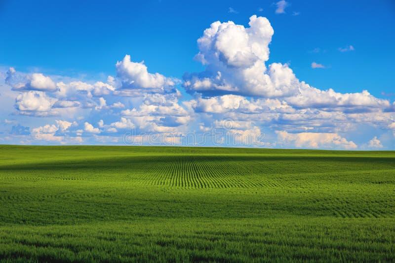 Blauer Himmel des grünen Feldes stockfoto
