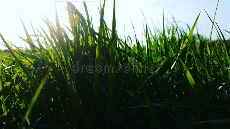 Blauer Himmel des Grases und des Sonnenstrahls stockbild