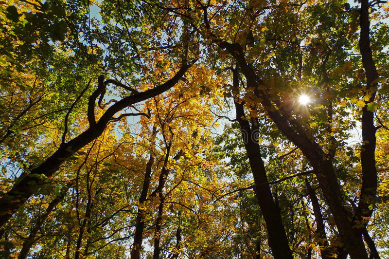 Blauer Himmel durch die bunten Blätter der Bäume lizenzfreies stockfoto