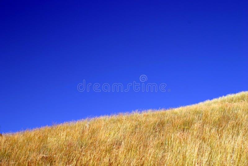 Blauer Himmel-Gelb-Gras Stockbild