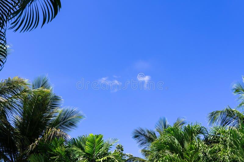 Blauer Himmel gestaltet durch Palmblätter, Wolken in der Mitte stockfotos