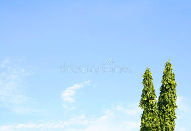 Blauer Himmel mit asoka Bäumen stockbild