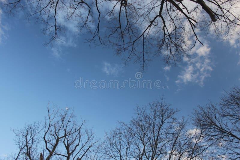 Blauer Himmel mit den Wolken gestaltet durch Baumzweige stockbilder