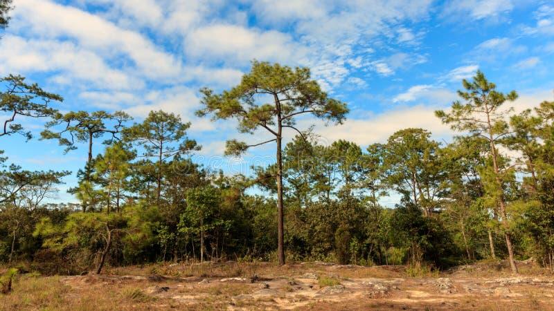 Blauer Himmel mit Wolke im Wald stockfotografie