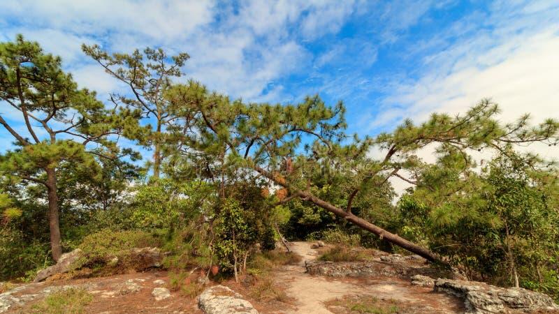 Blauer Himmel mit Wolke im Wald lizenzfreie stockbilder