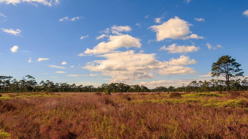 Blauer Himmel mit Wolke im Wald stockfotos