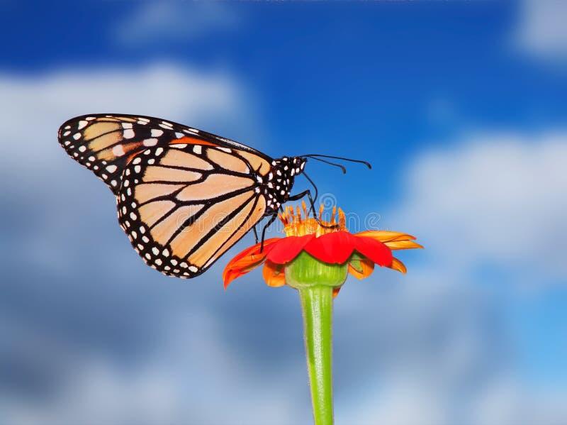 Blauer Himmel-Monarch lizenzfreies stockbild