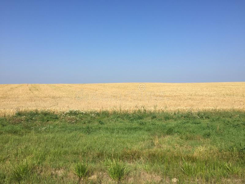 Blauer Himmel, Roggenfeld, grünes Gras stockfotografie