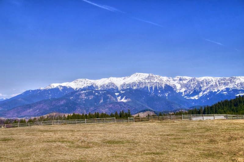 Blauer Himmel, schneebedeckter Berg, Wald und Wiese lizenzfreie stockbilder
