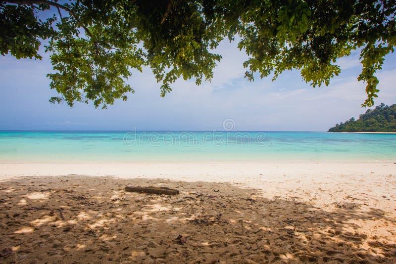 Blauer Himmel und Baumzugang zum auf den Strand zu setzen lizenzfreie stockfotografie