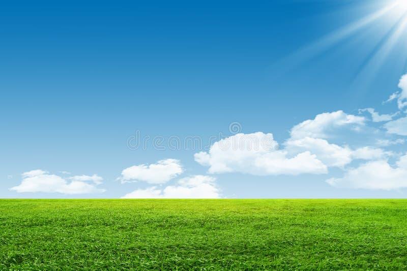Blauer Himmel und grünes Feld stockfotografie