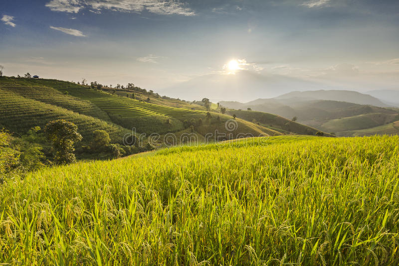 Blauer Himmel und grünes terassenförmig angelegtes Reis-Feld in PA bong piang Chiangma stockbild