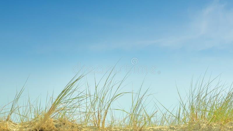 Blauer Himmel und Strandhafer an einem sonnigen als Hintergrund zu verwenden Tag, lizenzfreies stockfoto
